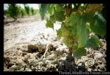 Wine Tasting in Niagara Falls Region